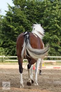 Pony von hinten
